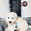 Thumbnail: Troy - Male | 8-Weeks Old | Miniature Schnauzer