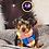 Thumbnail: Hooey - Male | 8-Weeks Old | Yorkshire Terrier