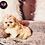 Thumbnail: Autumn - Female | 9-Weeks Old | Shichon