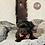 Thumbnail: Piper - Male | 8-Weeks Old | Shorkie Tzu