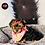 Thumbnail: Tootsie - Female | 8-Weeks Old | Yorkshire Terrier