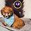 Thumbnail: Jaylon - Male | 8-Weeks Old | Toy Poodle