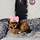 Thumbnail: Rya - Female | 8-Weeks Old | Shorkie Tzu