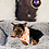 Thumbnail: Hershey - Male | 8-Weeks Old | Yorkshire Terrier