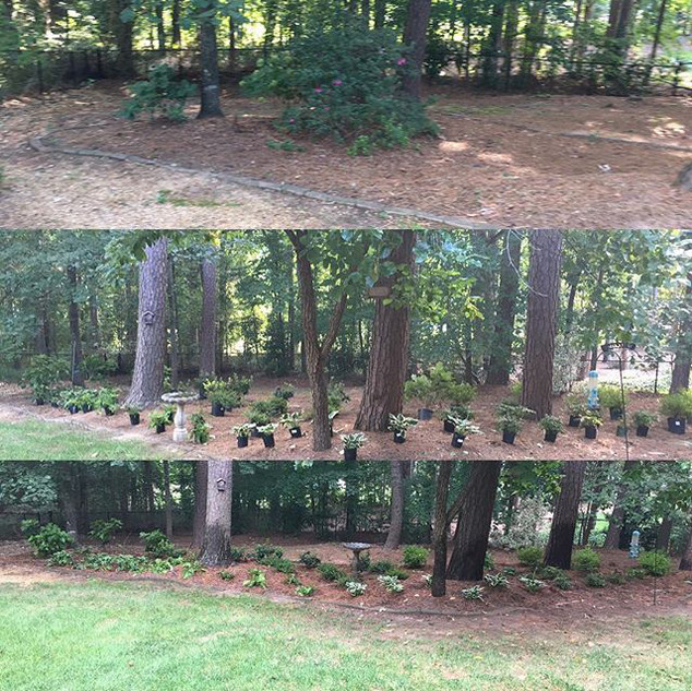 Plant Install