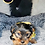 Thumbnail: Max - Male | 8-Weeks Old | Yorkshire Terrier