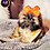 Thumbnail: Jeanene - Female   9-Weeks Old   Shorkie Tzu