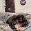 Thumbnail: Woody - Male   8-Weeks Old   Shorkie Tzu