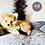 Thumbnail: Tuggles - Male | 8-Weeks Old | Pomeranian