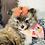 Thumbnail: Rayelle - Female | 8-Weeks Old | Pomeranian