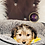Thumbnail: Arlo - Male | 8-Weeks Old | Yorkipoo