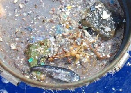 Cientistas usam dados de satélite da NASA para rastrear microplásticos oceânicos
