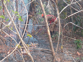 Fogo na Chapada dos Veadeiros afeta 14 mil hectares
