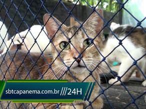 AMACAP tem novo espaço para atender os animais e pede ajuda para população