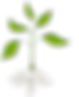 roots-clipart-plant-nutrient-9.png 1 tre