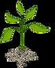 roots-clipart-plant-nutrient-9.png 1 tre