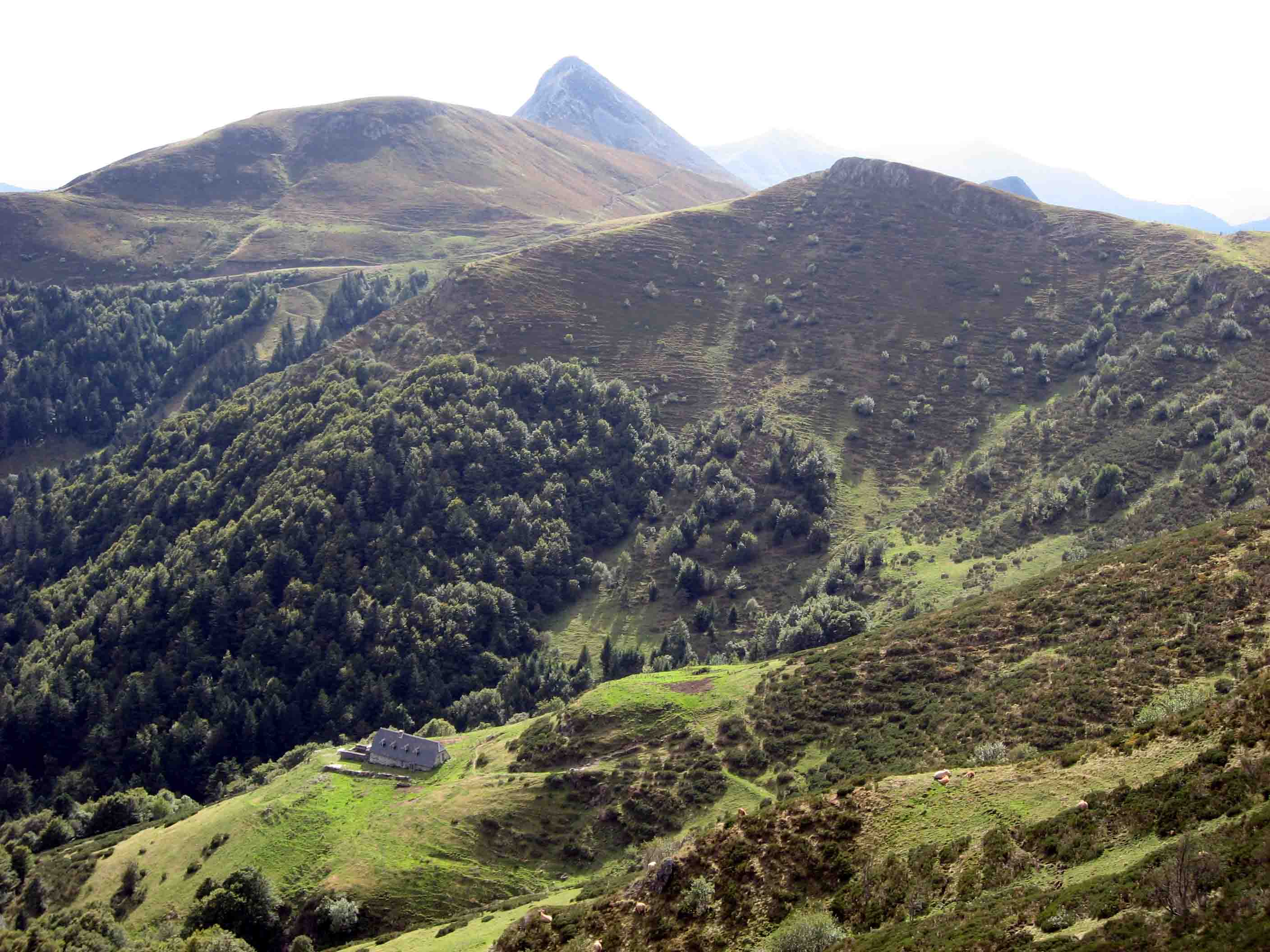 Monts de Cantal