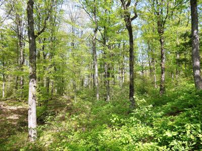 Les bois de Burgy Printemps.jpg