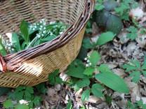 Les bois de Burgy petite madeleine.jpg