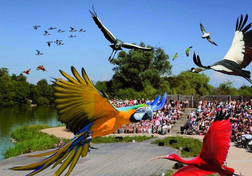 Parc-des-oiseaux