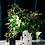 Thumbnail: Pomponette Vases