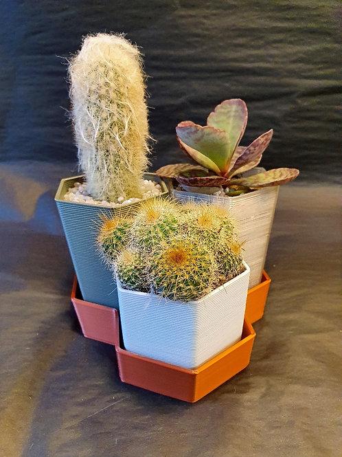 Mini Cacti Garden. Pots and plants.