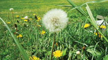 Tip for a preventive Weed propagation.