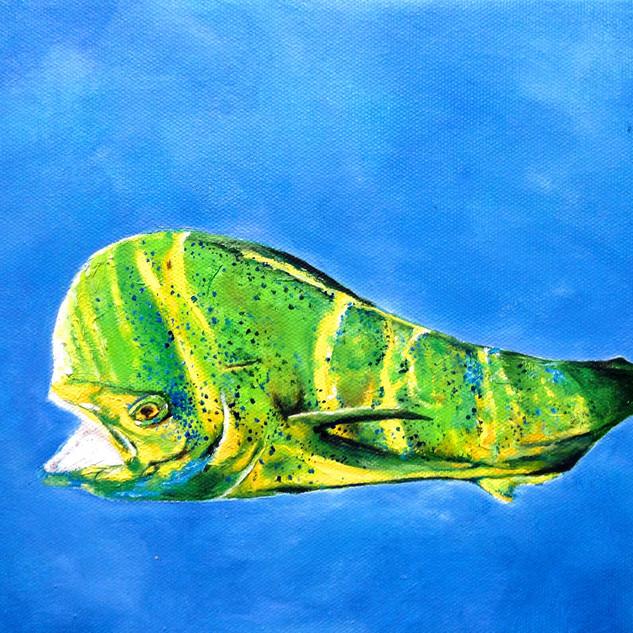 Dolphin Series I