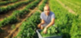 Inhaber My Keng auf dem Feld beim Zutaten pflücken