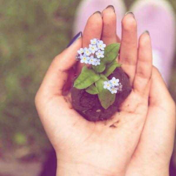 Seedling in Hands