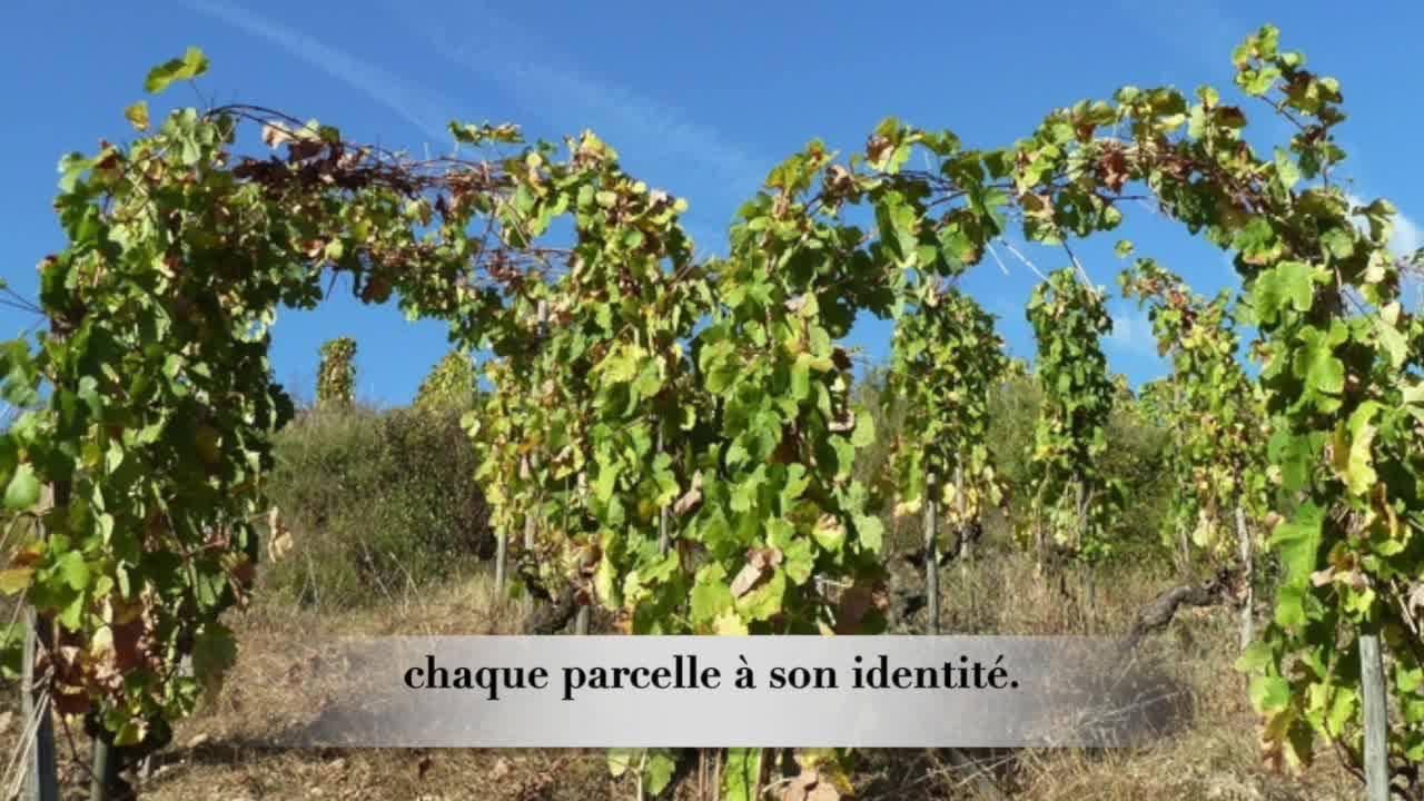 Quand La Potiniere part à la découverte de vos vins #Gonon #Curtat #Jolivet #goodwine #Geneva