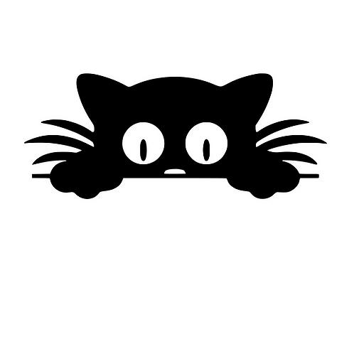 Katt till ficka