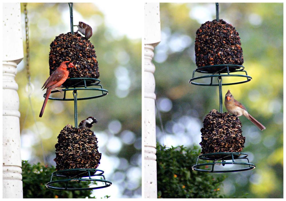Birds!.jpg