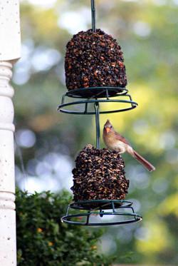 Mr.Bird Feeders