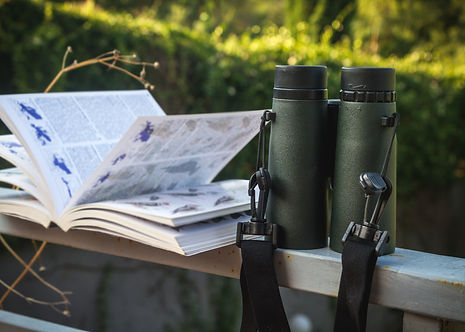 Binoculars and Bird Guide, Birdwatching