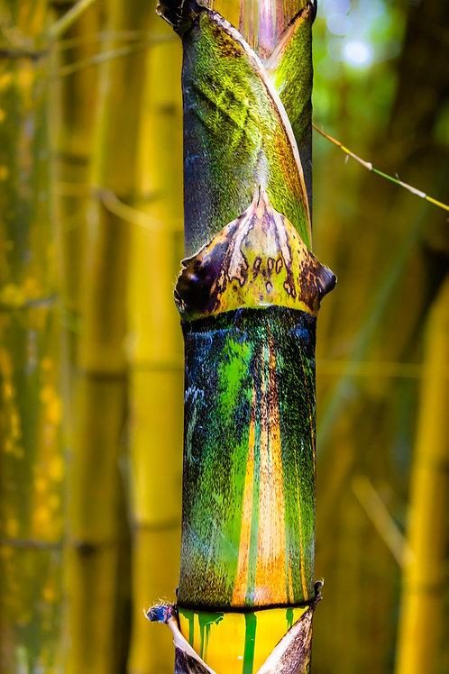 Inner Bamboo