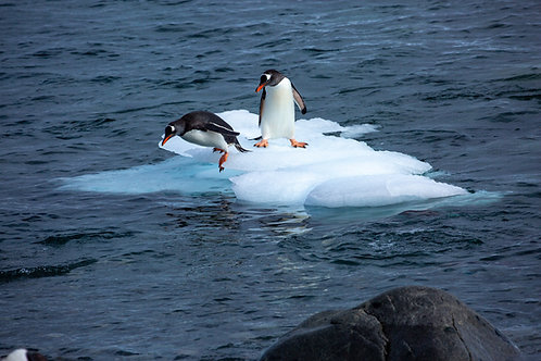 """King of the Ice 2"" - Antarctica"