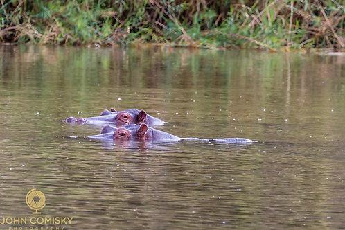 Africa - Hippo 2