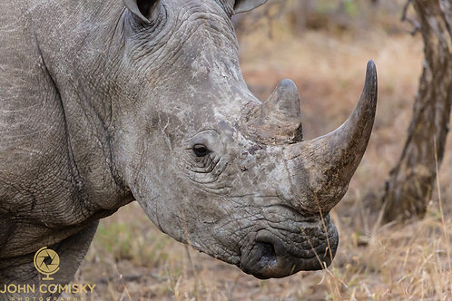 """""""Rhino"""" - Africa"""