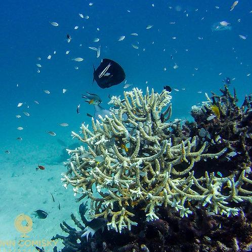 Great Barrier Reef - From Below 1
