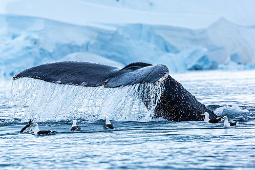 Whale Tail - 1