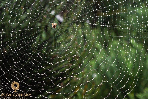 Insect - Rained on Web
