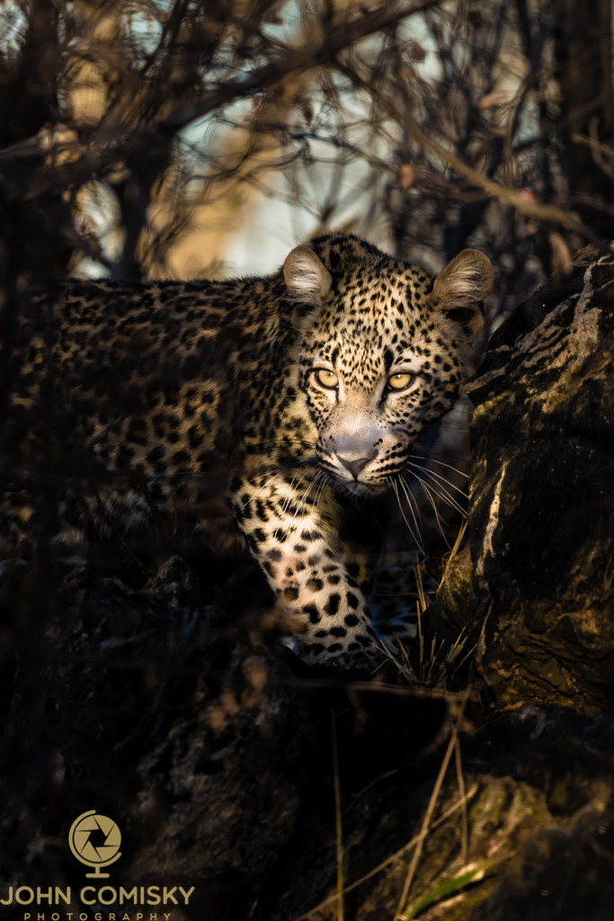 Africa - Leopard and Sunbeam.jpg