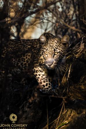 Africa - Leopard and Sunbeam.jpg