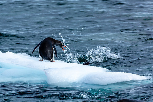 """King of the Ice 4"" - Antarctica"