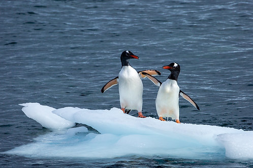 """""""King of the Ice 3"""" - Antarctica"""