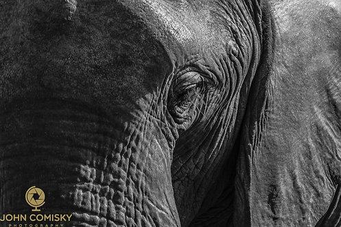 "African Elephants ""Texture of Elephant"""
