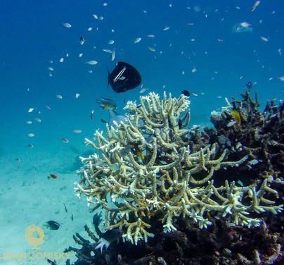 Great Barrier Reef - From Below 1.jpg