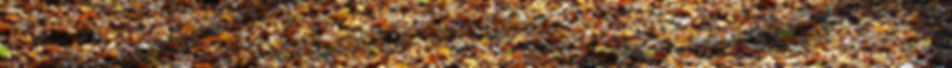 Autumn-leaves-SM-68x980px-banner.jpg