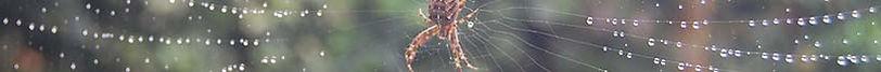 Spider-SM-68x980px-banner.jpg